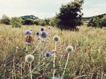 Wilde vegetatie Royalty-vrije Stock Foto's