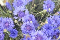 Wilde violette purpere bloemen royalty-vrije stock foto's