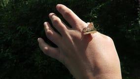 Wilde vlinder op hand Bosaardvideo stock footage