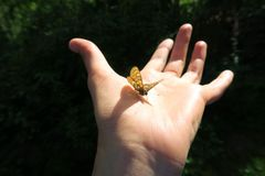 Wilde vlinderzitting op hand Bosaard stock foto's