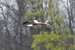 Wilde vogel Stock Afbeelding