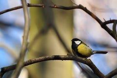 Wilde vogel Royalty-vrije Stock Foto