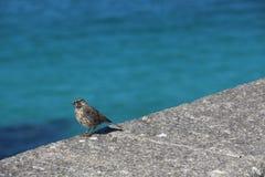 Wilde vogel die insect eten bij het overzees Stock Afbeeldingen