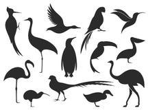 Wilde vogel Het silhouet van de vogel royalty-vrije illustratie