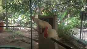 Wilde vogel in Sri Lanka Royalty-vrije Stock Afbeelding