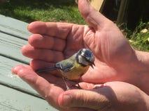 Wilde vogel in tot een kom gevormde handen stock afbeelding