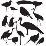 Wilde vogels Vector Illustratie