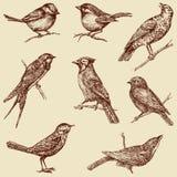 Wilde vogels Stock Afbeelding
