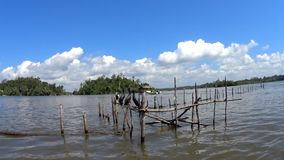 Wilde vogels op Madu River stock video