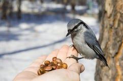 Wilde vogelzitting op hand Stock Foto