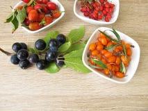 Wilde vruchten in de herfst met sleedoornvruchten, berberissen, duindoornvruchten en rozebottels Royalty-vrije Stock Foto