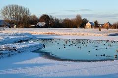Wilde Wasservögel auf gefrorenem See im Winter Stockfotografie