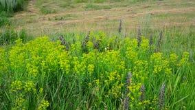 Wilde weide met het hellen van en het kweken van gras stock videobeelden