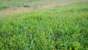 Wilde weide met het hellen van en het kweken van gras stock footage