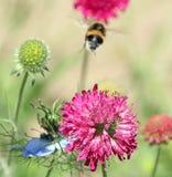 Wilde weidebloemen en bij stock foto's