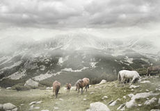 Wilde weiden lassende Pferde stockfotos