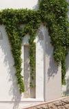 Wilde wijnstok die de muur van een huis beklimt Royalty-vrije Stock Foto's