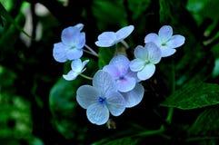 Wilde witte bloemen royalty-vrije stock afbeelding