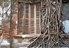 Wilde wortelstrog de muur en de oude vensters Stock Afbeeldingen