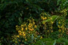Wilde yeoolwbloemen binnen stroomopwaarts Royalty-vrije Stock Afbeelding