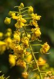 Wilde yeoolwbloemen binnen stroomopwaarts Stock Afbeelding