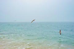 Wilde zeemeeuwvogels die en voedsel over overzees oceaanwater vliegen zoeken Royalty-vrije Stock Fotografie