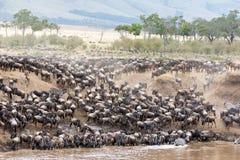 Wildebeest και με ραβδώσεις στις όχθεις του ποταμού της Mara Στοκ εικόνες με δικαίωμα ελεύθερης χρήσης