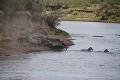 wildebeest στοκ φωτογραφία
