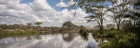Wildebeest At The Serengeti National Park Royalty Free Stock Photo
