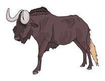 Wildebeest. Creative design of wildebeest draw Stock Images