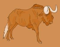 Wildebeest  draw. Vector draw of arican wildebeest Royalty Free Stock Photos