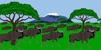 Wildebeest herd in african scenery. Illustration of a Wildebeest herd in African scenery with mount Kilimanjaro in the background Stock Image