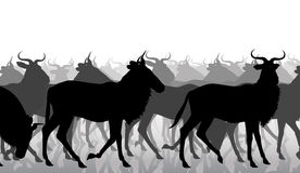 Wildebeest migration. EPS8 editable vector cutout illustration of a herd of adult wildebeest Stock Photography