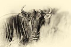 Wildebeest, National park of Kenya. Vintage effect Royalty Free Stock Images