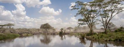 Wildebeest no parque nacional de Serengeti fotos de stock