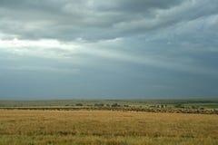 Wildebeest savannah landscape Stock Photos