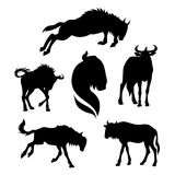 Wildebeest set vector. Wildebeest set of silhouettes vector royalty free illustration