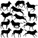 Wildebeest silhouettes. Set of eps8 editable vector silhouettes of adult wildebeest standing, walking, running and jumping Royalty Free Stock Photos