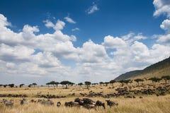 Wildebeestmigratie stock afbeeldingen