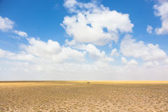 Wildebeests in Afrikaanse wildernis Stock Afbeeldingen