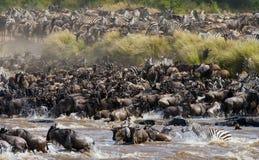 Wildebeests are crossing Mara river. Great Migration. Kenya. Tanzania. Masai Mara National Park. Stock Photo