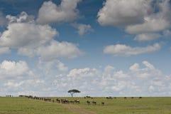 Wildebeests in der Savanne lizenzfreies stockbild