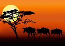 Wildebeests en puesta del sol ilustración del vector