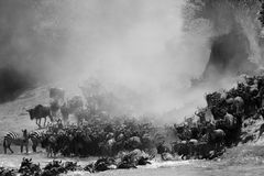 Wildebeests i zebry migruje przez Mara rzekę zdjęcia royalty free
