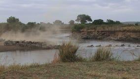 Wildebeests krzyżuje Mara rzekę. zbiory
