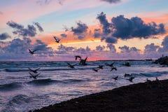 Wildenten bei Sonnenuntergang Lizenzfreies Stockfoto