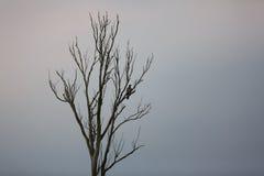 Wilder Adler auf einem Baum Stockfotos