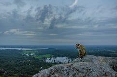 Wilder Affe auf einem Felsen Lizenzfreies Stockbild
