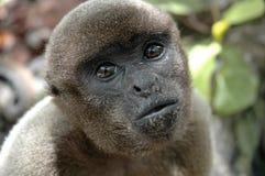 Wilder Affe Brasilien Stockbild