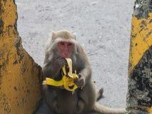 Wilder Affe, der Banane beim Tragen ihrer Junge isst Stockfoto